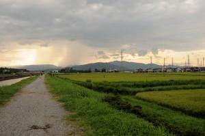The rice fields of Tsu