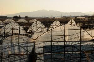 Abandoned greenhouses