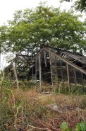 Abandoned glasshouse.