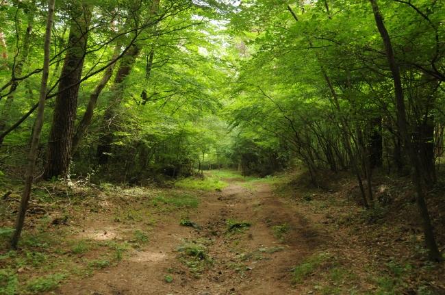 Yoshidaguchi Trail start