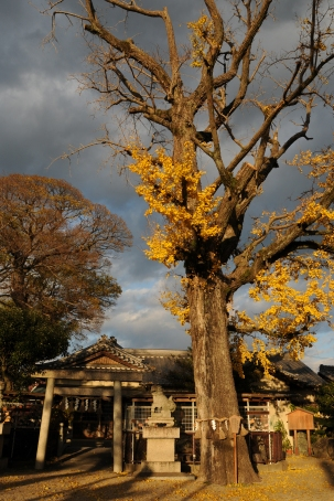 Ichikishimahime Shrine (市杵島姫神社)