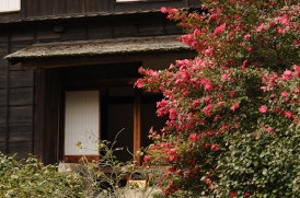 Camelias outside a reconstructed traditional farmhouse.
