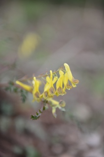 Yellow wildflower.