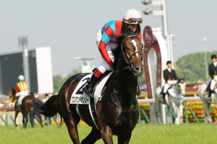 The 2014 Japan Derby winner One and Only.