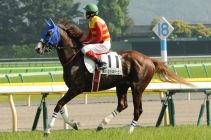Craig Williams preparing for the Japan Derby.