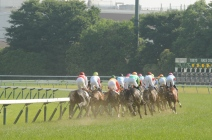 2014 Japan Derby field headding out of the straight.