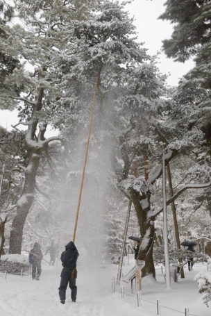 Workers clear snow from the old trees to prevent them breaking.