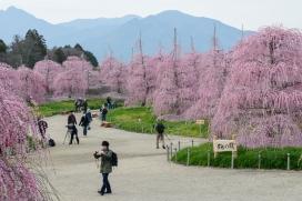 Suzuka Forest Park.