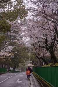 A priest on his way to a ceremony beneath the cherry blossoms.