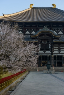 Dawn over Todaiji, Nara.