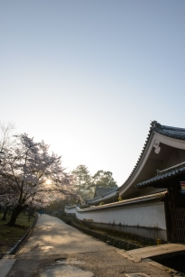 Dawn in Nara.