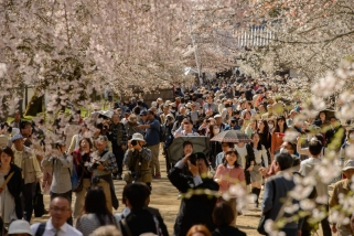 The massive crowds enjoying the cherry blossoms at the World Heritage Listed Daigoji Temple.
