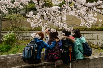 Photo session beneath the cherry blossoms along the Philosopher's Path, Kyoto.