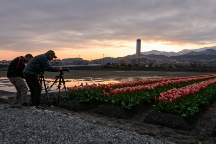 Photographers wait for dawn to break over a tulip field in Toyama Prefecture.