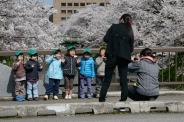 School childen having their photo taken by their teachers beneath the cherry blossoms in Toyama City, Toyama Prefecture.