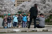 School childen having their photo taken by their teachers beneath the cherry blossoms in Toyama City, Toyama Prefecture.