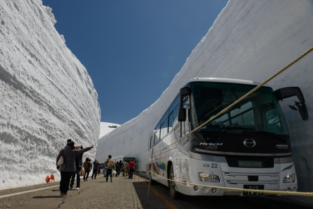 Buses help to appreciate just how tall the walls of snow are in the snow corridor on the Tateyama Kurobe Alpine Route.