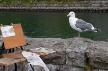 Feathered art critic, Otaru, Japan.