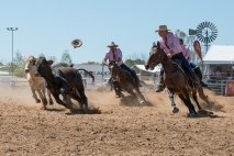Calgary Stampede Bosses Challenge, team campdraft, RM Williams Muster